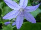 Дачные цветы 2008 :: cveti_28