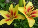 Дачные цветы 2008 :: cveti_30