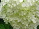 Дачные цветы 2008 :: cveti_41